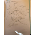 An amazing turtle drawing and vocabulary