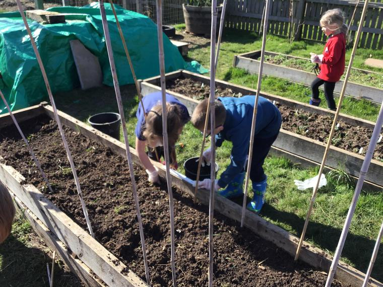 Preparing the soil and constructing a frame for the beans to climb