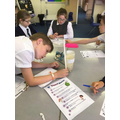 Yeast races in Y6