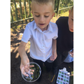 Lookings for minibeasts in Y1