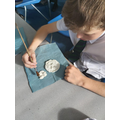 Y6 being paleontologists