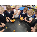 How many seeds does a pumpkin have in Y1