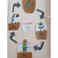EYFS are learning all about plants and growing