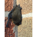 We found a bat this morning