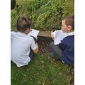 Exploring animals in Y4