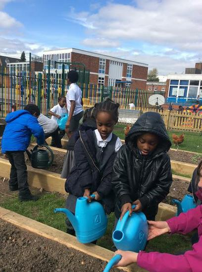 Reception have been helping to plant vegetables