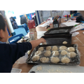 Placing our rolls onto the baking tray