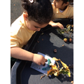 Exploring Autumn resources and using them to make pictures.