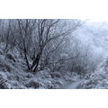 """Hollie J's entry for our photography competition entitled """"Enchanted Forest"""""""