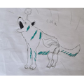 Joshua's drawing of an Arctic Wolf
