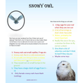 """Anna's poster about """"How to look after a snowy owl"""""""