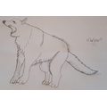 Lucy's drawing of an Arctic Wolf