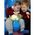 Harvest veg exploration with cuddles!