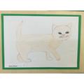 Emily's Kitten