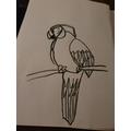 Liam's Parrot