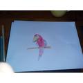 Charlea's Parrot