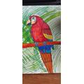Esme's Parrot