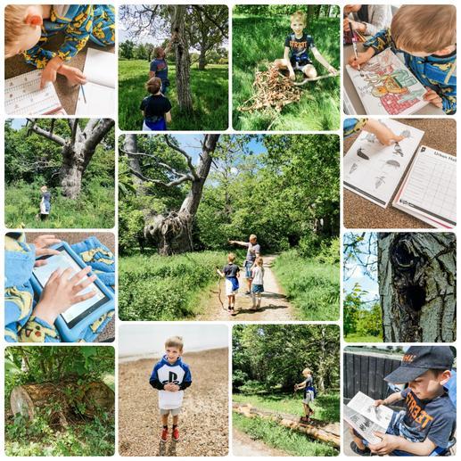 Environmental learning- habitat fun!