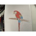 Sadie's Parrot