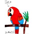 Aiden's Parrot