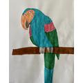 Sophie's Parrot