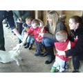 Feeding the Lamb and Goats