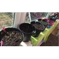 Ella has been busy planting lots