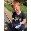 Healthy broad bean plant