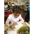 Observational drawing of a sunflower.