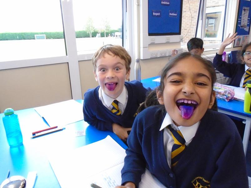 Children in 4T completing the task to see how much plaque is on our teeth.
