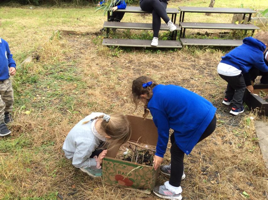 We recycled materials to create Bug Hotels.