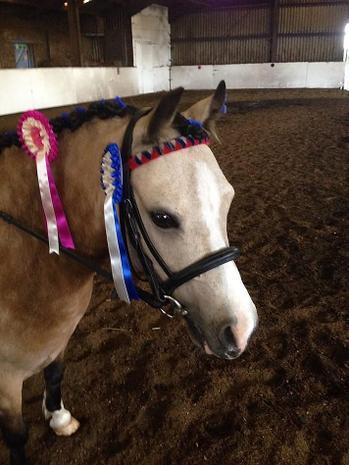 Hamza is looking forward to riding Poppy the pony!
