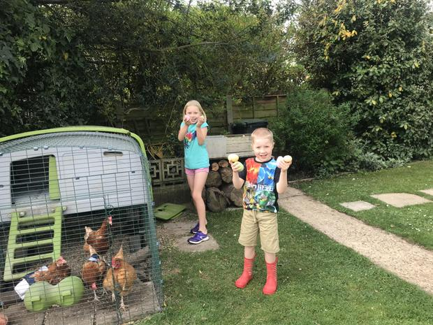 Polly's chickens laid chocolate eggs!