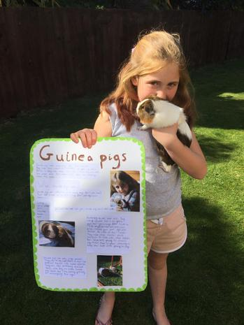 Aimee's guinea pig project (and guinea pig!)