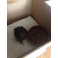 Rescuing a little bird