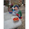 Yummy strawberries grown in the garden