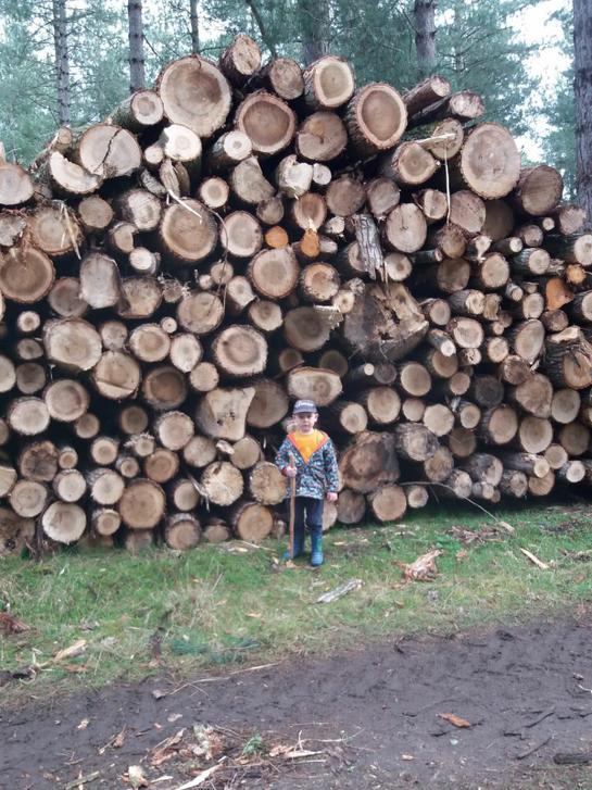 A nut and a log pile house (The Gruffalo)
