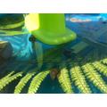 Pond snail habitat