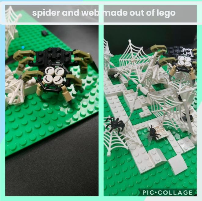 How many eyes does a spider have ?