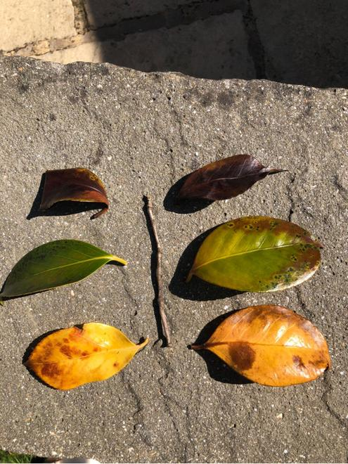 Good symmetry.  Your leaves match well.