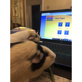 Nibbles & Cuddles setting tasks