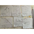 Year 6 Adaptation of Animals in cold environments fact cards