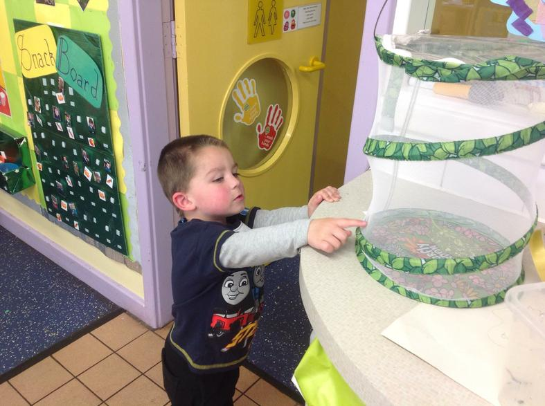 Finley observing our butterfly!