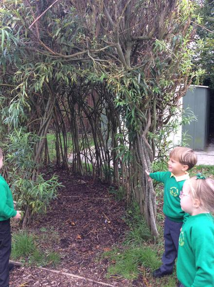 We looked at the colours of leaves