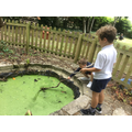 A spot of pond dipping