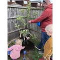 Jack planting his tree Locky McLockdown.jpeg