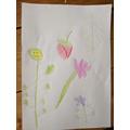 Rudy's garden drawings