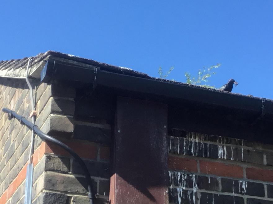 Chicks in the bricks again!.JPG