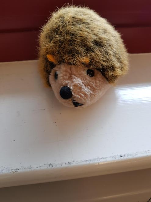 I wonder where Herbert the Hedgehog is hiding in the classroom?