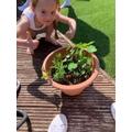 Mollyplanting seeds.jpeg